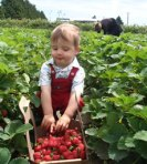 child_picking_strawberries